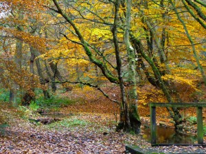 'A late autumn scene along Red Beck … I took this because it looked pretty.'